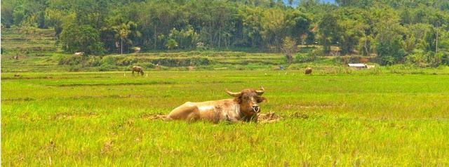 Wilayah Darat (Luhak) Minangkabau