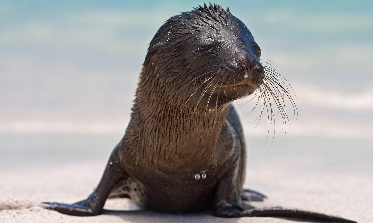 Cute Baby Seals Wallpapers Wallpaper Proslut Pictures Of Animals