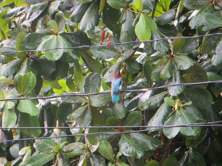 Птица на проводах