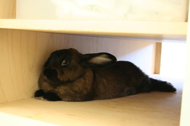 The Raspberry Rabbits: Happy Friday  Mama's being a Slacker