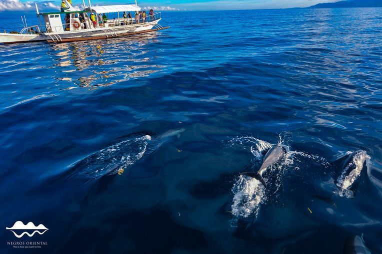 Dolphin-watching in Tañon Strait near Dumaguete City