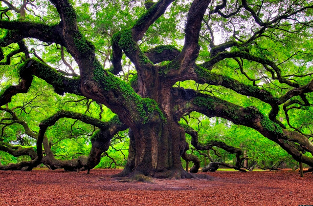 Arbor Day HD Images, Pictures, Wallpapers