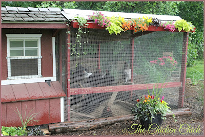 CHICKEN RUN: a fenced, outdoor enclosure attached to a chicken coop. aka: pen, run, yard