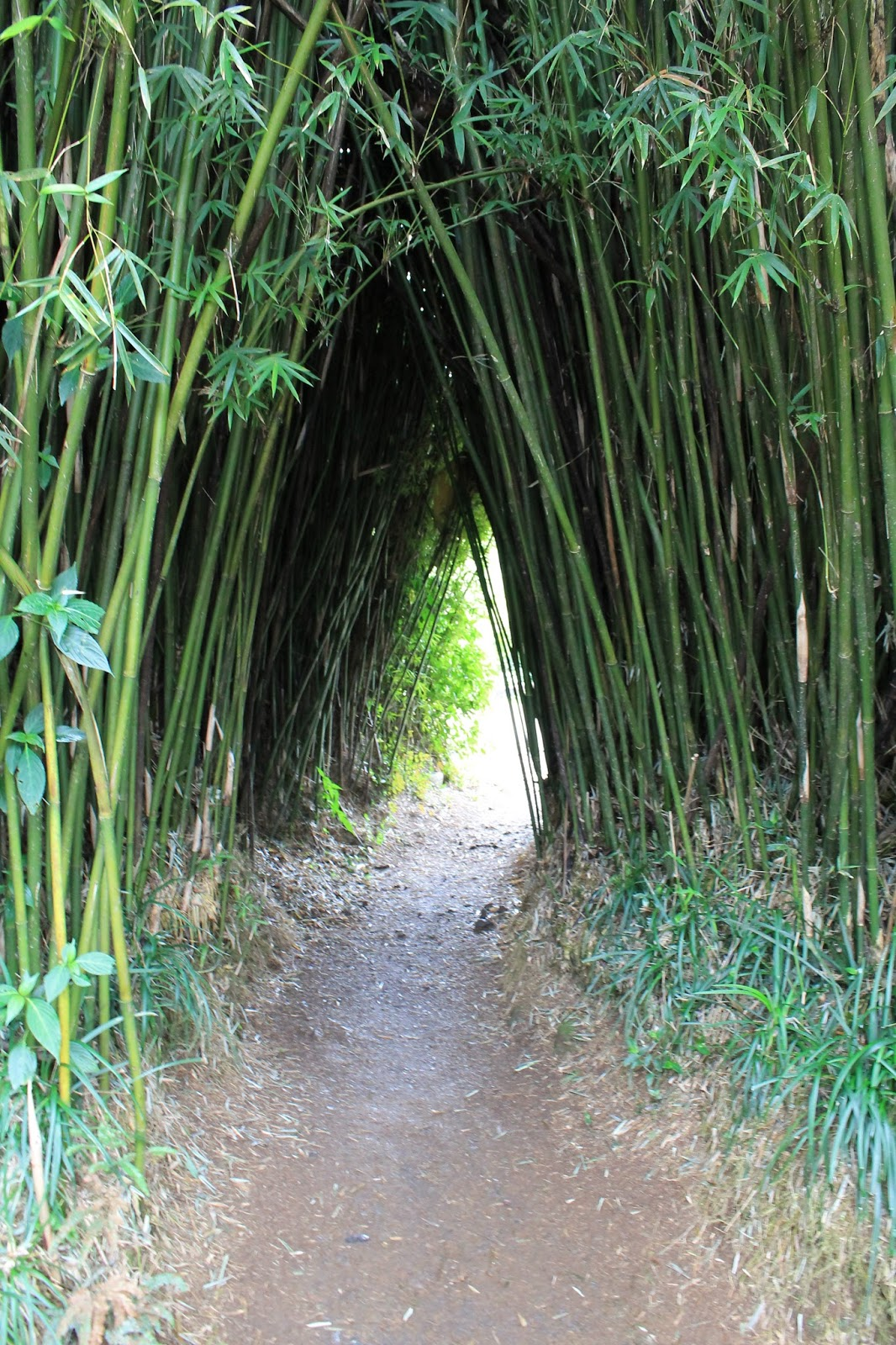 réunion île gotoreunion labyrinthe en champ thé tea grand coude visite à faire jumbocar irt tourisme 974 bambou entrée