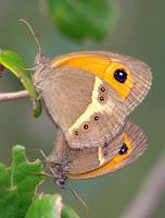 http://biomoncayo.blogspot.com.es/2011/03/indice-invertebrados-mariposas-y-falenas.html