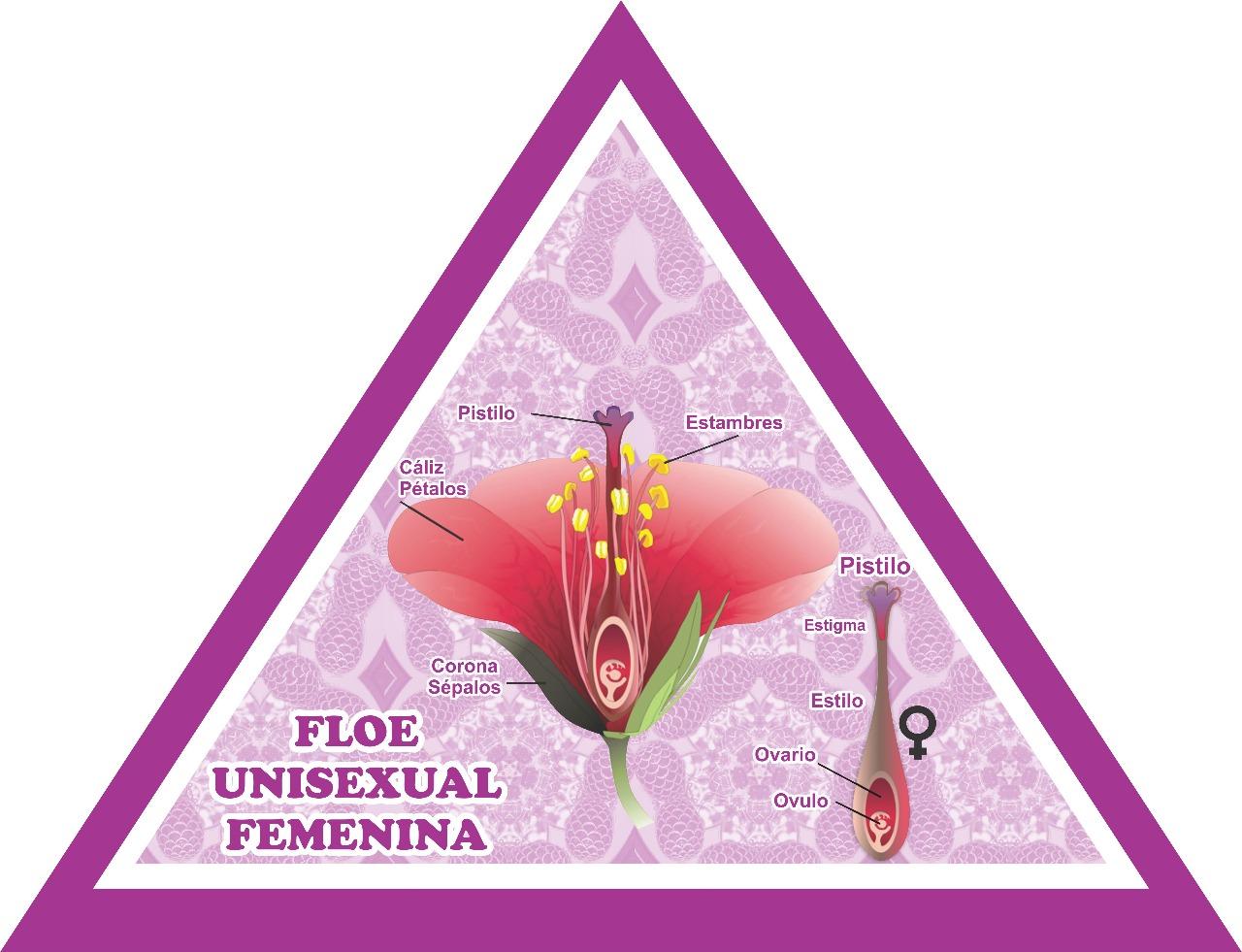 Ciencias Naturales Ceuja 17 Actividad 6 Flor Unisexual Femenina Y