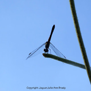 Dance of the Dragonfly step 7