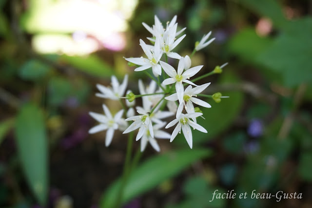 Bärlauchblüte Makro Makrofotografie