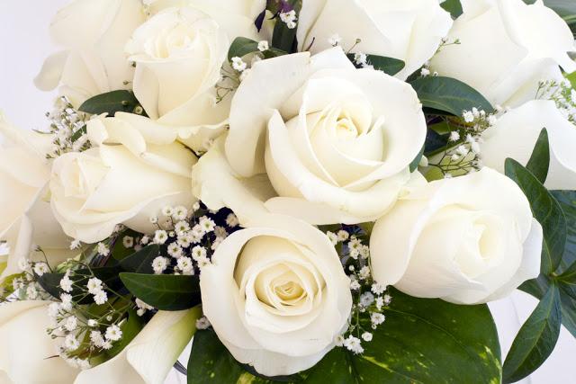Hoa hồng trắng dep nhat