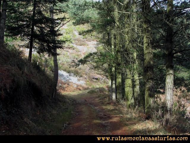 Ruta Alto Aristebano, Estoupo, Capiella Martín: Pista en el pinar