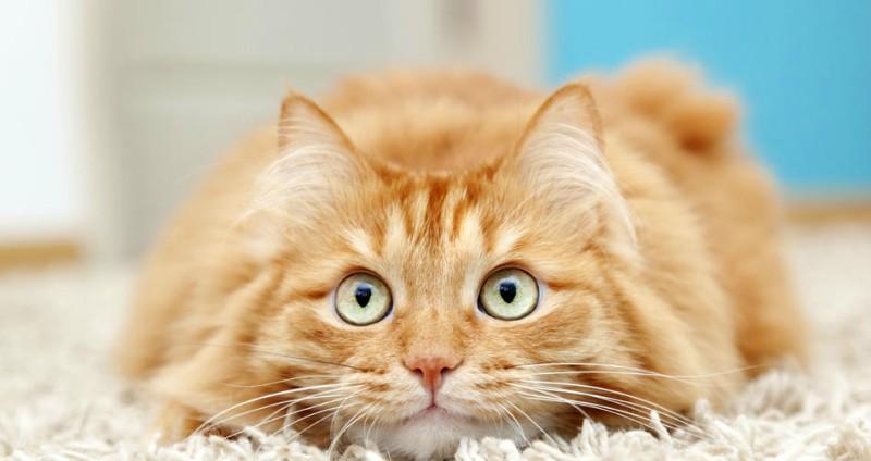 Συμβουλές για τη μακροζωία της γάτας