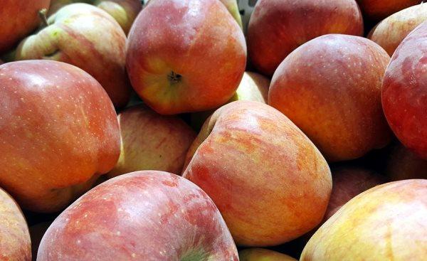 البدء بصرف أثمان التفاح المسوق لفرع المؤسسة السورية للتجارة بالسويداء