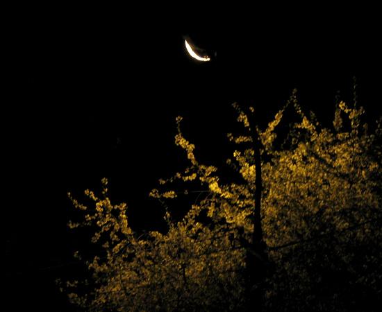 ночь, фонарь, Night. Bloom