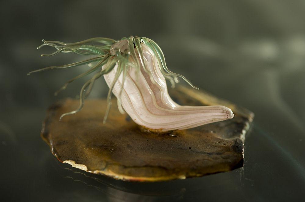 Blaschka's glass models of sea anemones.
