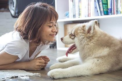Natural Balance Dog Food And Allergies