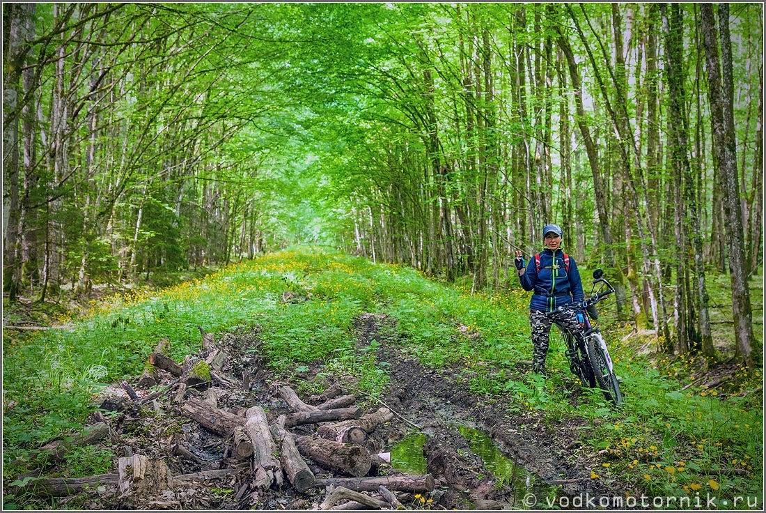 На лесной велодорожке