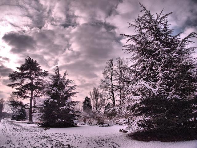 Kew Gardens in Winter - www.All-About-London.com