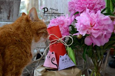 Katze Mimi beschnuppert eine Katzentorte