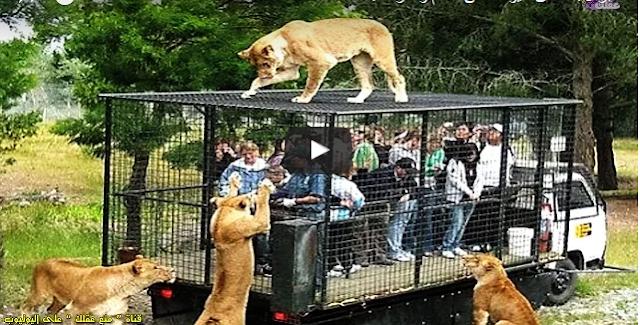 أكبر 10 حدائق حيوانات فى العالم وأكثرها جمالاً