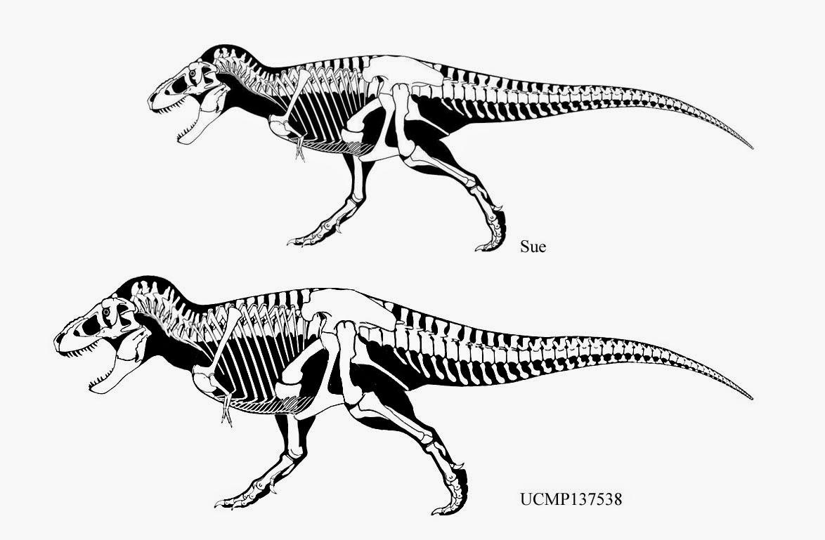 Dinosaurs World O T Rex Tinha 15 Metros De Comprimento