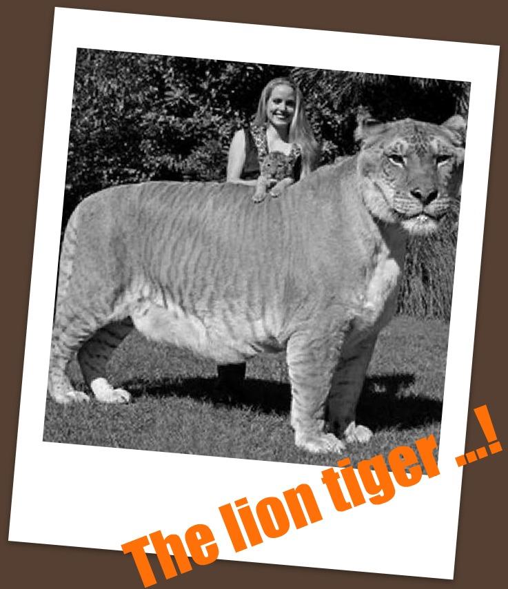 Που είναι τίγρης που χρονολογείται 2015