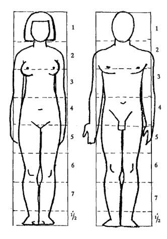 الفرق في النسب بين الرجل والمرأة