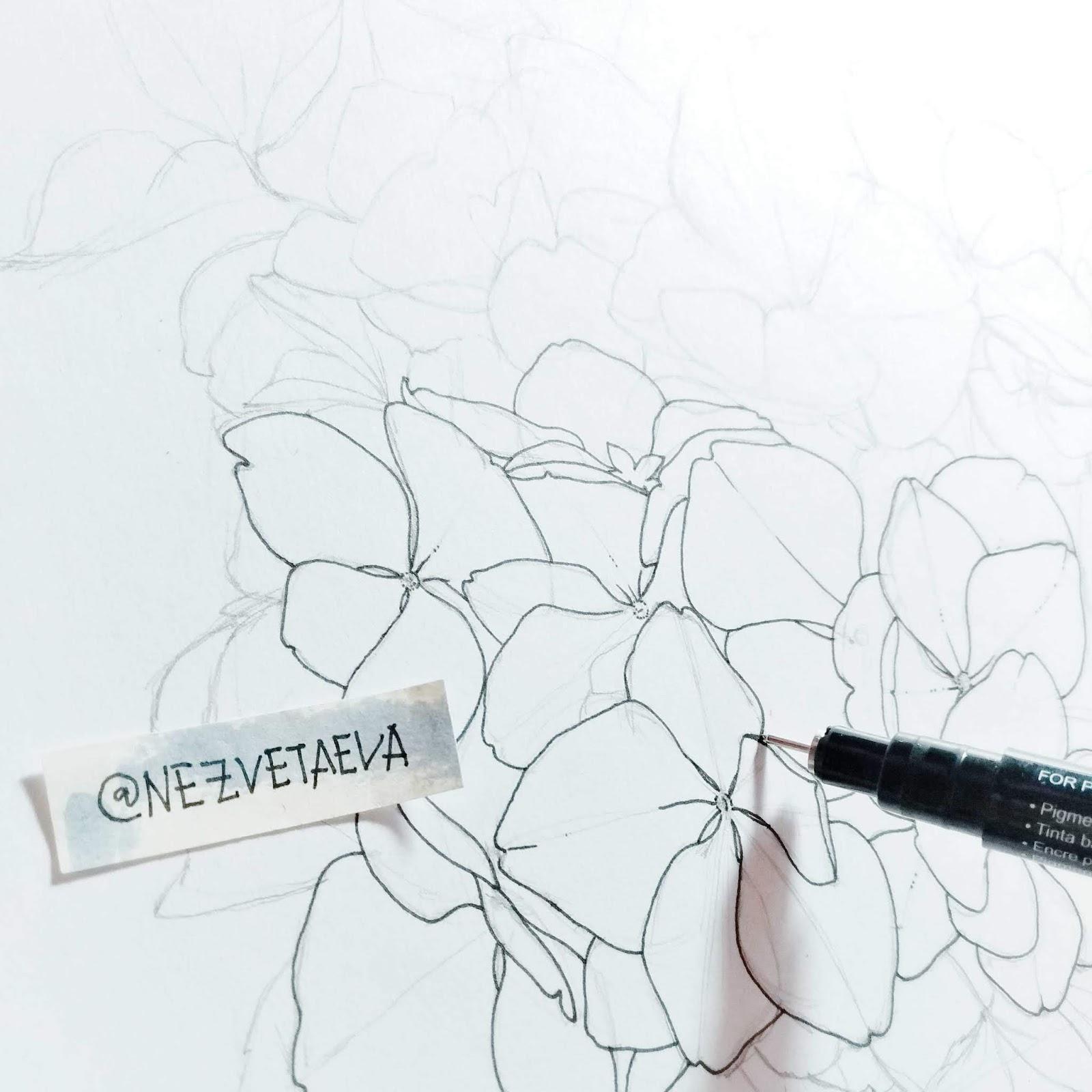 hydrangea, marker sketch, Sonia Nezvetaeva, artist diary
