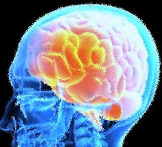 Ketahuilah Bahan Makanan Sumber Nutrisi Untuk Otak
