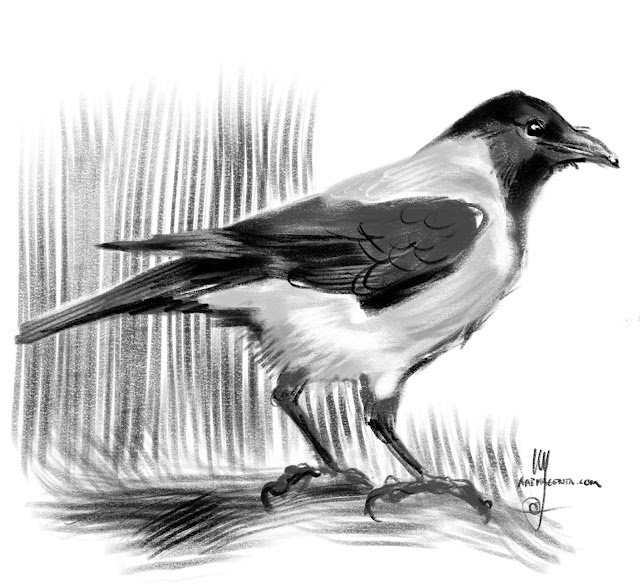 Hooded Crow bird painting by Artmagenta