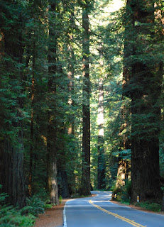 Driving the Avenue of the Giants California