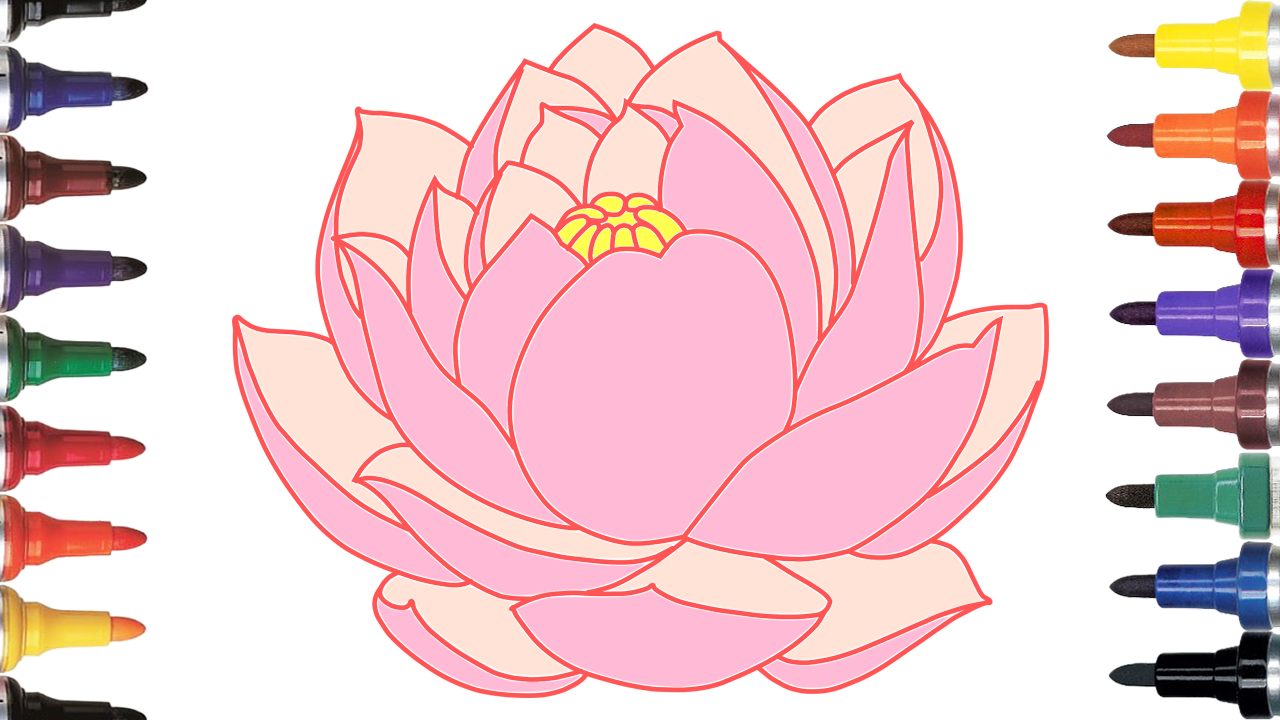 Video For Kids And Drawing Coloring How To Draw Lotus Flower Lotus