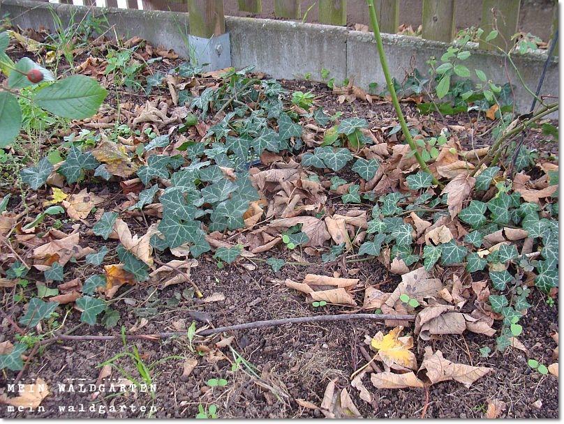 http://mein-waldgarten.blogspot.de/2014/10/auf-den-letzten-drucker-der-12tel-blick.html