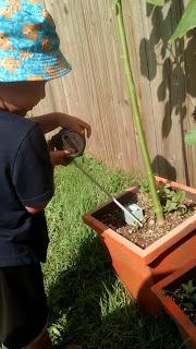 will he grow into a Future Kenaf and Hemp Farmer