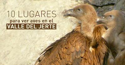 10 lugares para ver aves en el Valle del Jerte