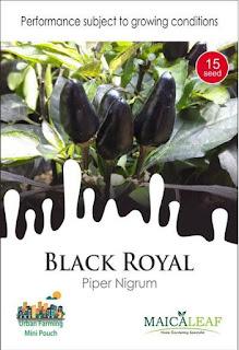 benih-cabai-black-royal.jpg