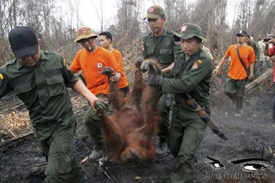 Lingkungan Hidup, Flora Fauna, Kerusakan Flora Fauna, Dampak Kerusakan Flora Fauna.