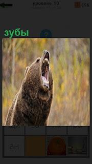 Стоит медведь и широко открыл свою пасть, внутри оказались большие зубы