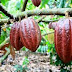 How Introduced The Process Of Chocolate Making?