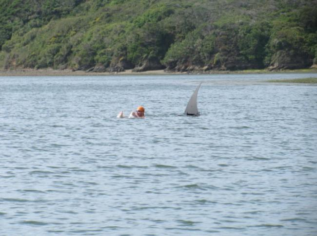 FRANCISSWIM - ESPORTES AQUÁTICOS: Swimming In The Breeding ...