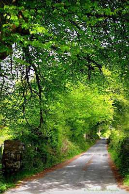 country road surrounded by green trees