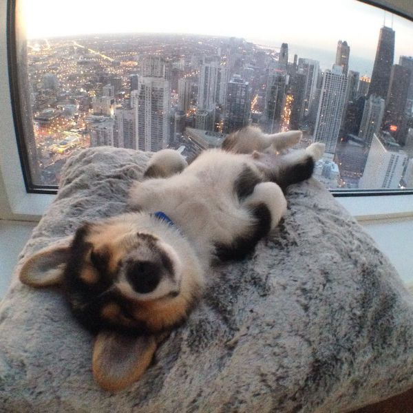 Cute dogs - part 239, cute dog photo, best funny dog images