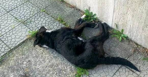 """Acri, trovato cane morto nella scuola """"Pastrengo"""""""