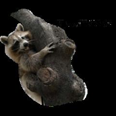 happy raccoon mimi