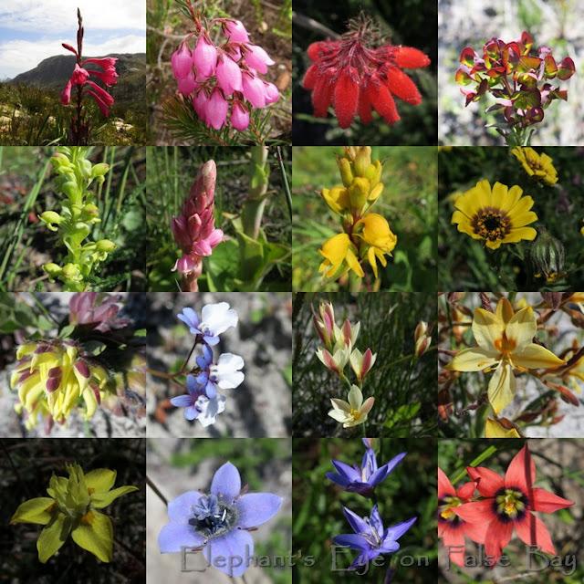 Redhill Brooklands September flowers