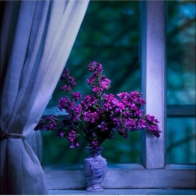 كُن مُزهِراً غابَ الزهرُ بينَ 11189656_47097723972