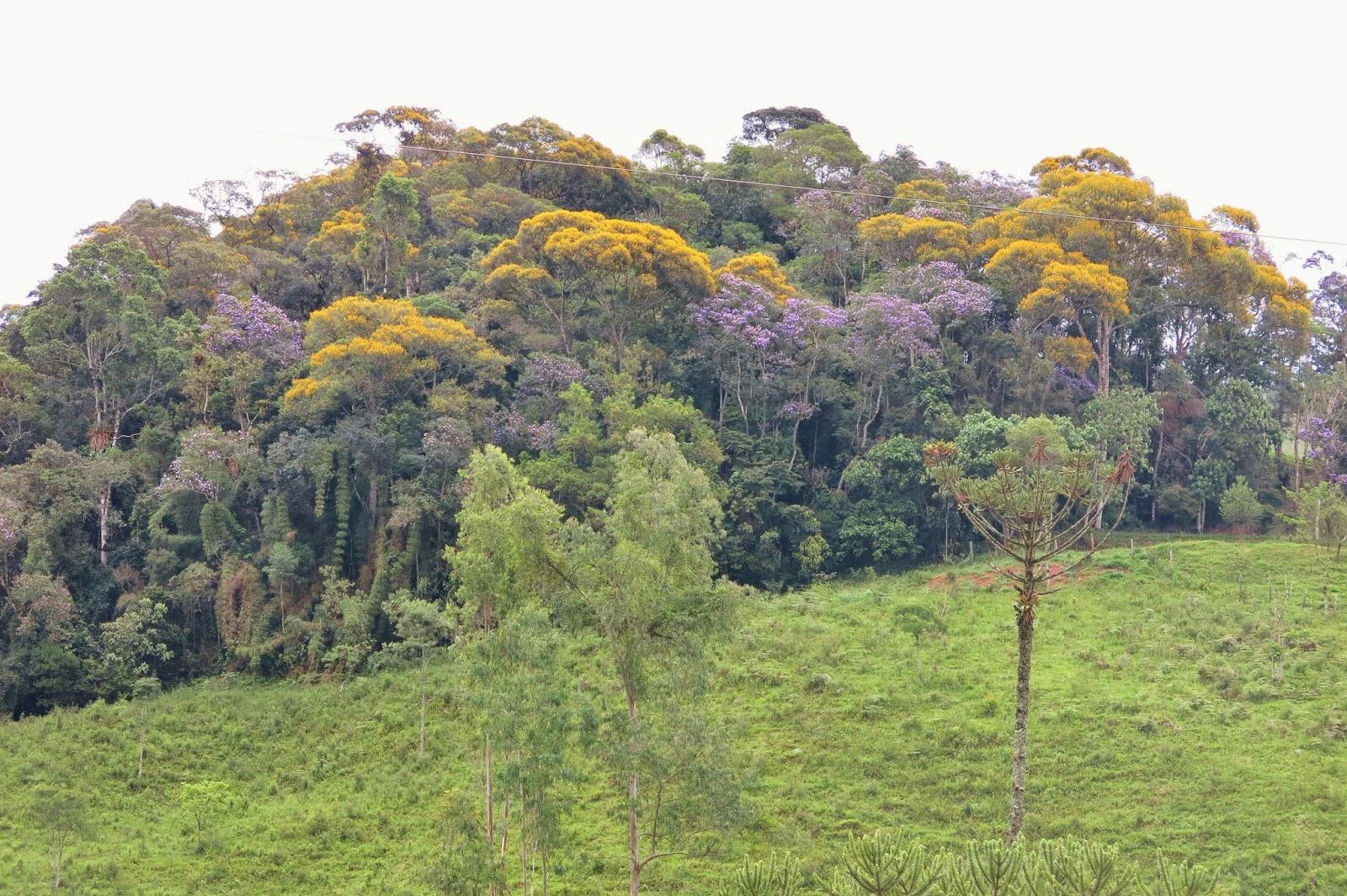 Vale do Alcantilado em Visconde de Mauá