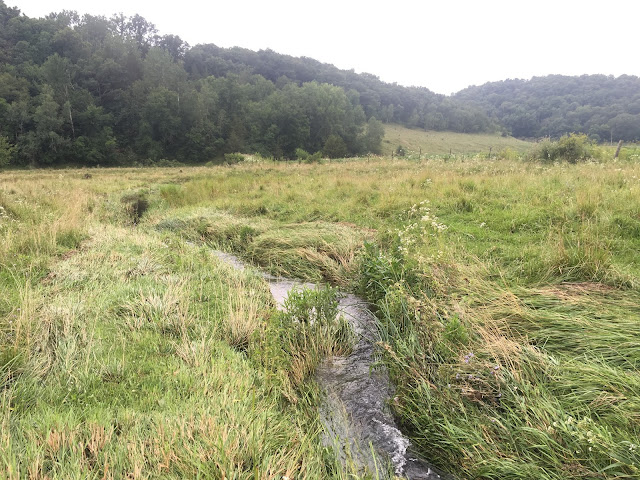 Tiny Driftless Wisconsin brook and brown trout stream
