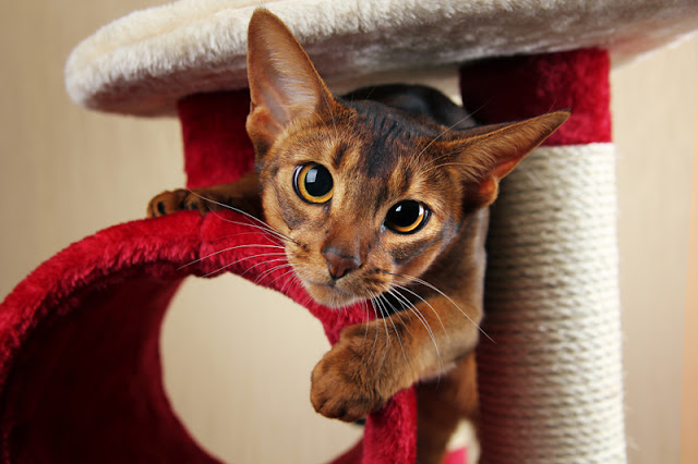 Easy ideas for enrichment for cats