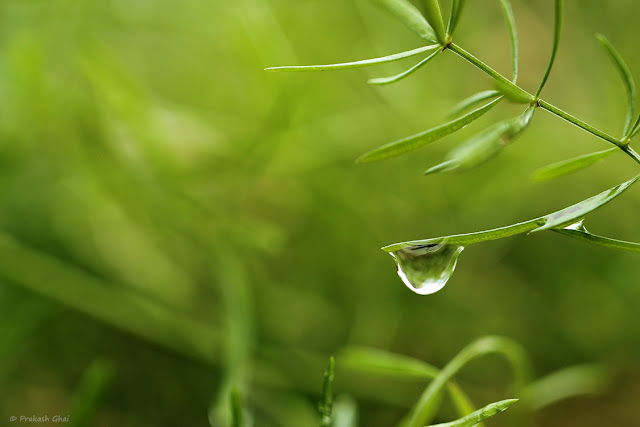Minimalist Photo of Single Water Droplet on Tiny Plant Leaf