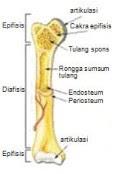 https://biologi.guruindonesia.id